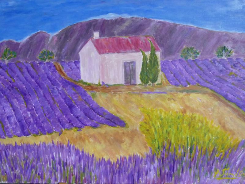 Lavendelfelder in der Haute Provence