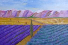 Lavendelfeld während der Ernte
